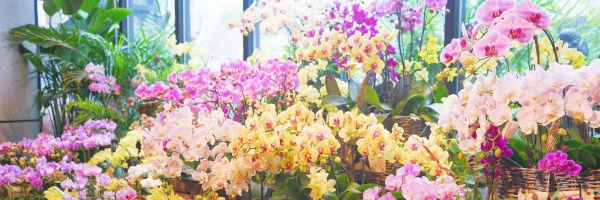 des bouquets de fleurs dans une boutique