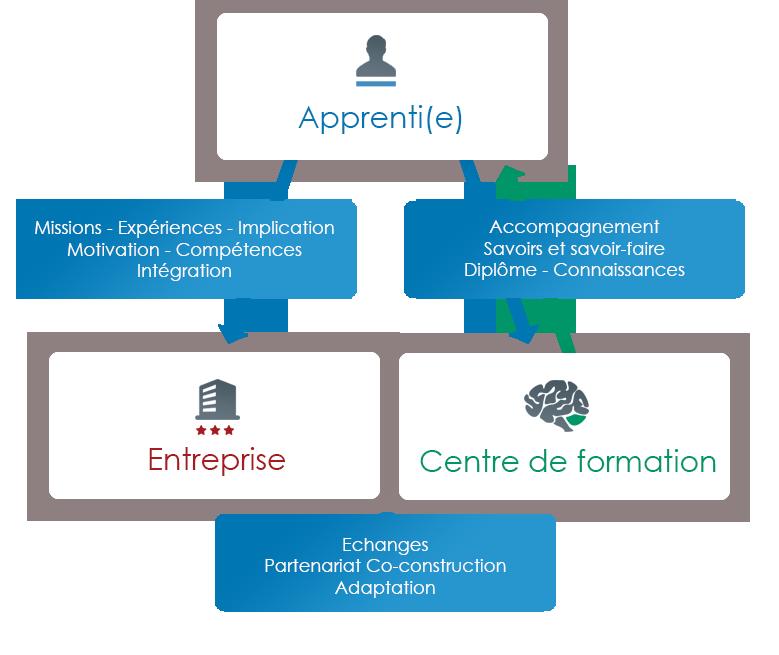 schéma qui présente l'apprentissage