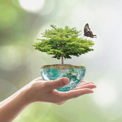 une main qui tient un petit arbre avec un papillon