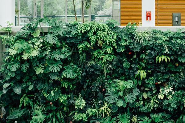 vue sur un mur végétal