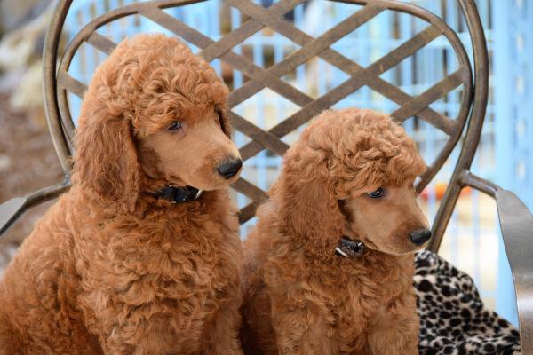 gros plan sur deux chiens