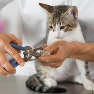 un chat se fait couper les griffes